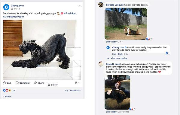 chewy social media examples