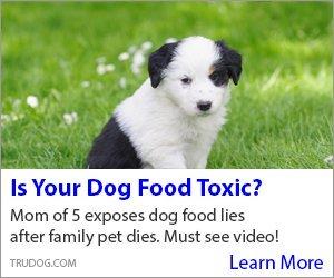 Toxic_Dog_Food3300x250