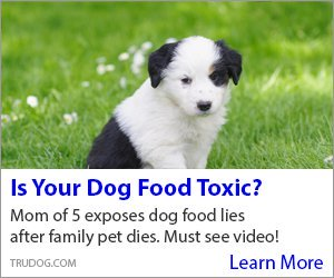 Toxic_Dog_Food3300x250